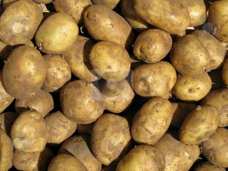 Close up of dirty cooking potatoes outside a greengrocers. stock photo, Close up of dirty cooking potatoes outside a greengrocers. by Stephen Rees