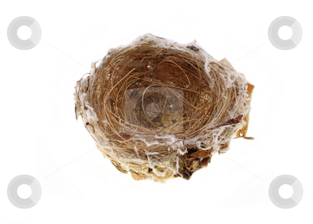 Empty birds nest stock photo, Empty birds nest over a white background by Christopher Meder