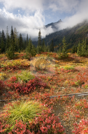 Autumn before the Storm stock photo, Unicorn Peak peaks from behind storm clouds with autumn colors ablaze in an alpine meadow by Mike Dawson