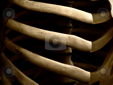 Human Rib cage stock photo, Close-up of a human skeleton ribcage. by W. Paul Thomas
