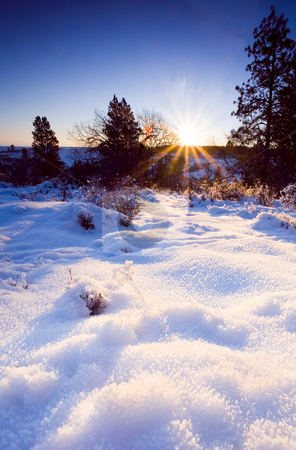 Winter Snowscape stock photo, Sunrise over a snowcovered meadow in Eastern Washington by Mike Dawson
