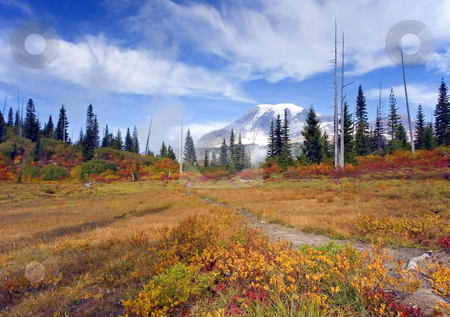 Autumn Trails stock photo, A trail cuts across a meadow ablaze in fall color with Mt. Rainier in the background by Mike Dawson