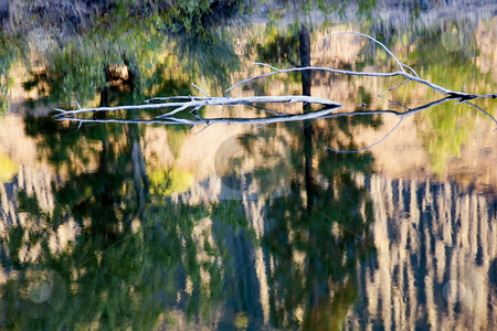 Autumn Reflections stock photo, Autumn colors reflect on the still waters of  Tim's Pond along the Tieton River by Mike Dawson