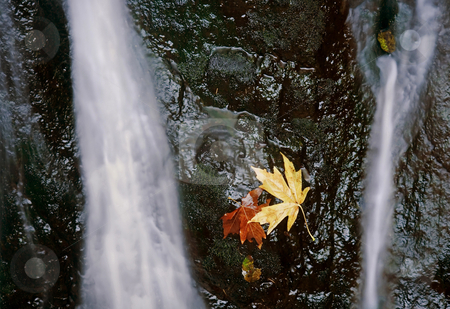 Autumn trapped stock photo, Autumm leaves trapped on the wet rock as a small cascade of water flows around them by Mike Dawson