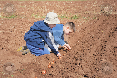 Boys sowing onion stock photo, Two cute boys playing and sowing onion. by Ivan Paunovic