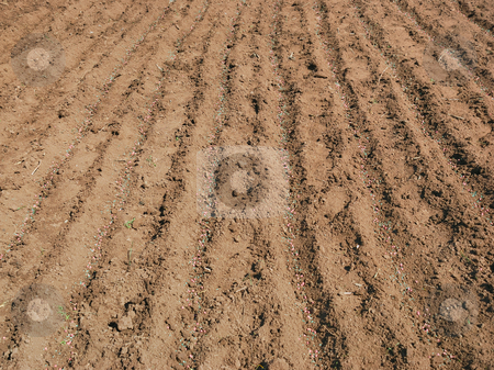 Pea seed and fertilizer stock photo, Pea seed and fertilizer on the ground. by Ivan Paunovic