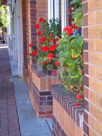 Red Geranium Flowers stock photo,  by Michael Felix
