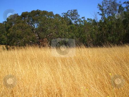 Grass Field stock photo,  by Michael Felix