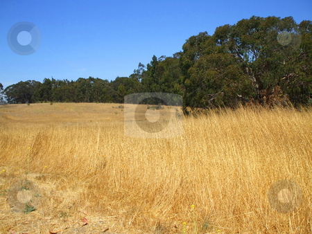 Grass Field stock photo,  by Michael Felix