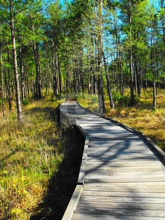 Walking trail in sundew trail stock photo, A walking trail on the sundew trail of the big thicket national preserve by Robert Brown