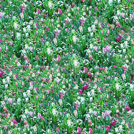 Flower Meadow Seamless Pattern stock photo, Flower Meadow Seamless Pattern - this image can be composed like tiles endlessly without visible lines between parts by Denis Radovanovic