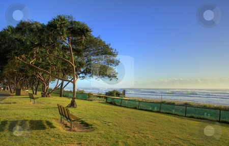 Beach Foreshore stock photo, Lonley seats on the beach foreshore with trees in the early morning sun. by Brett Mulcahy