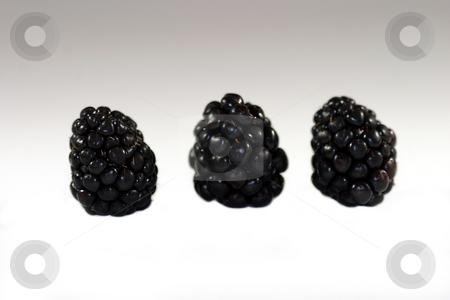 Blackberry stock photo, Blackberries on white background in a group of three. by Henrik Lehnerer