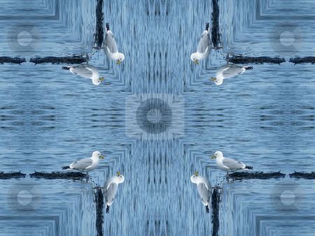 Gulls Cross Background Pattern stock photo, Gulls Cross Background Pattern by Dazz Lee Photography