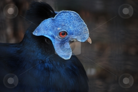 Bird stock photo,  by Sarka