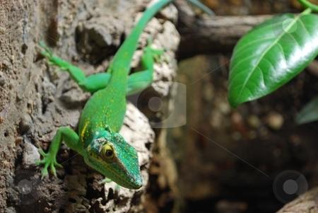 Green lizard stock photo,  by Sarka
