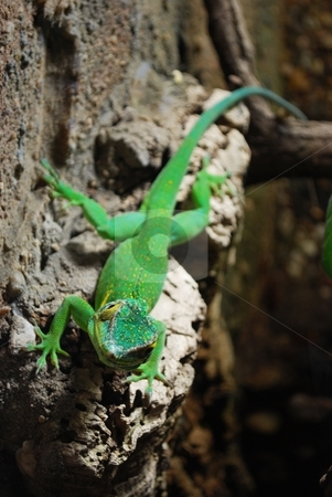 Green lizard stock photo,  by Sarka