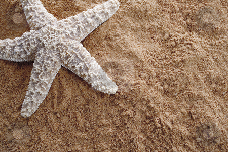 Sstarfish on sand stock photo, Closeup of starfish on sand, very detailed macro shot by iodrakon