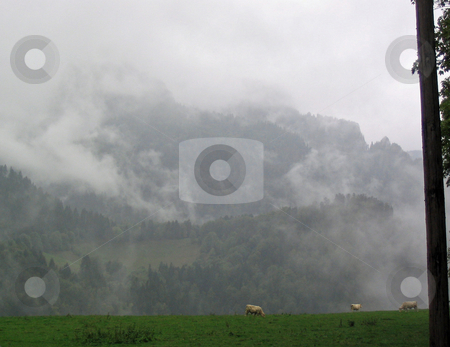 Chartreuse stock photo, Fog in Chartreuse France by Jaime Pharr