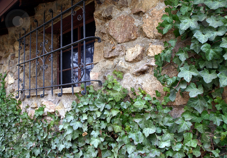 Ivy covered stone wall and window stock photo, Green ivy vines climb up a stone and rock wall towards an iron covered window by Jill Reid