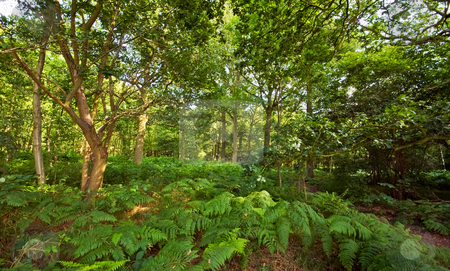 Forest with fern undergrowth stock photo, Nice bright fresh green forest covered with ferns undergrowth by Karin Claus