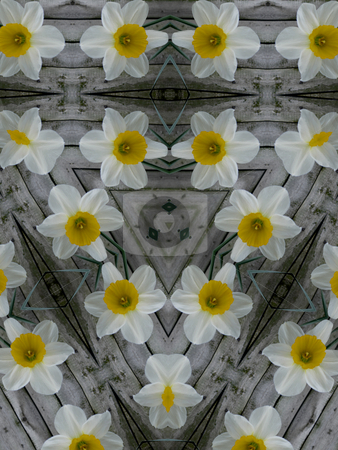 Spring Daffodil Background Pattern stock photo, Spring Daffodil Background Pattern by Dazz Lee Photography