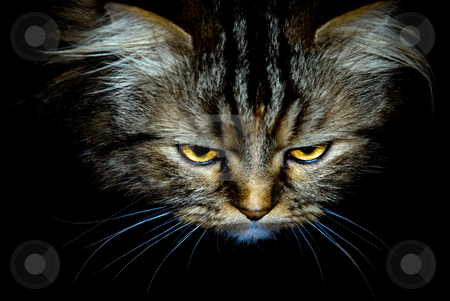 Cat's look stock photo, Cat's look on a black background by Alexey Rumyantsev