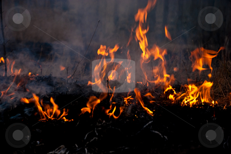 Burning flame stock photo, Dried up growing grass on a ground is on the fire by Alexey Rumyantsev