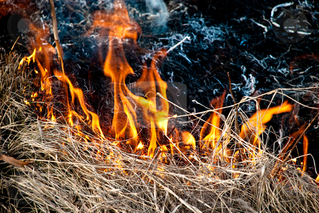 Burning grass stock photo, Dry grass is on the fire at spring time by Alexey Rumyantsev