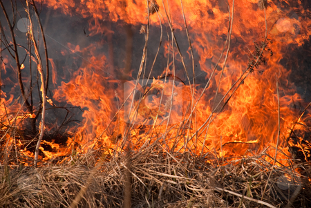 Burning grass stock photo, Dry grass and trees is on the fire at spring time by Alexey Rumyantsev