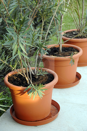 Plant pots in yard stock photo, Large brown plant pots in yard, sunny twig by Julija Sapic