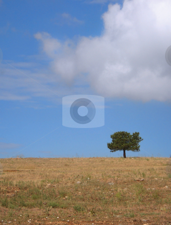Solitary Tree in Field stock photo, A single tree stands in a Colorado field under a cloudy sky. by Ben O'Neal