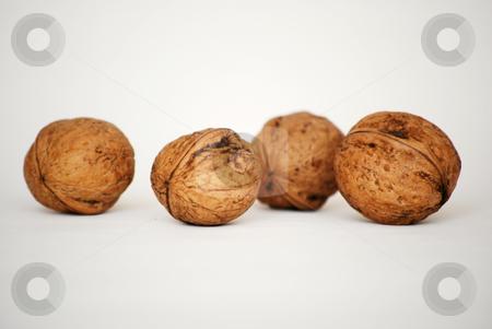 Nuts stock photo,  by Sarka