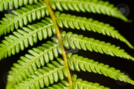 Fuzzy Fern stock photo, Closeup of a Fern by Charles Jetzer
