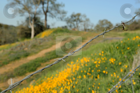 Barbed Wire Fence stock photo, Wire cattle fence with california poppies and other vegitation in the background by Lynn Bendickson