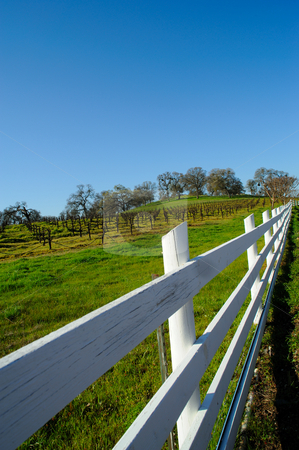 White Wooden Fence And Vineyard stock photo, A wood fence separating a vineyard from the public road by Lynn Bendickson