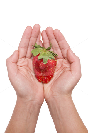 Strawberries in the hand stock photo, Woman hand olding strawberry by Paulo Resende