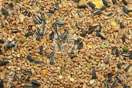 Mixed Bird Seed stock photo, A wide selection of grains, grasses and pulses, dried and mixed - designed for wild birds by Helen Shorey