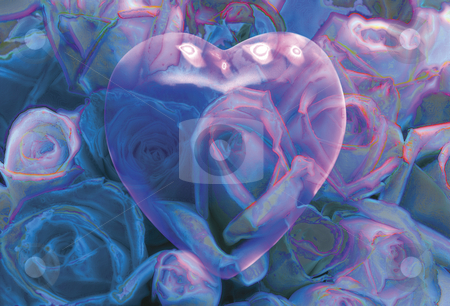 Faded Love stock photo, Clear Pink Heart over Field of Blue Roses by Miguel Dominguez
