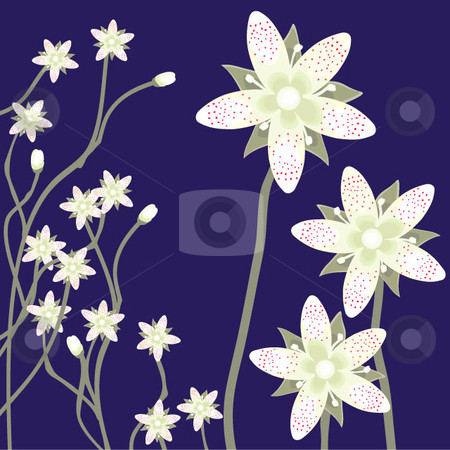 Spotted Saxifrage stock vector clipart, The spotted saxifrage flower in bloom, native to the Pacific Northwest. This is a botanical illustration. by Maggie Bates