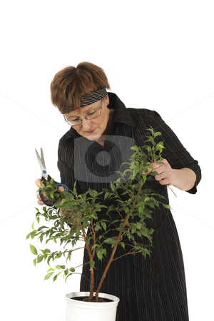 Servicing stock photo, Elderly woman services flowers with scissors by Tom P.
