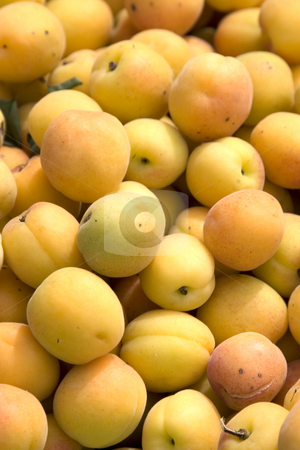 Apricots stock photo,  by Stefan Franz