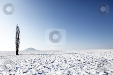 Landscape stock photo, Winter landscape with high tree alone by Tom P.