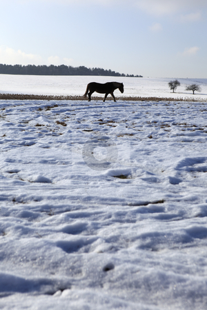 Landscape stock photo, Horse in winter landscape by Tom P.