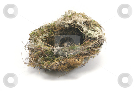 Small Birds Nest stock photo, Old and abandoned birds nest, probably a sparrow or other small bird. by Helen Shorey