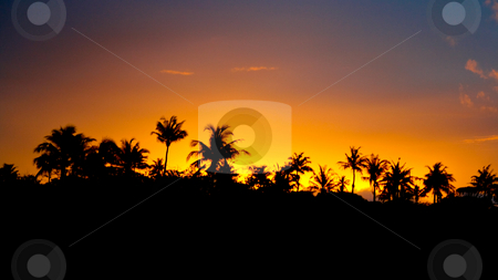 Tropical sunset stock photo, Tropical sunset over the palm-trees in Southern Africa by Raphael Vaney