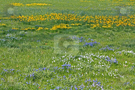 Spring field stock photo, Spring field photographed in Frankfurt Main, Hessen, Germany by Manuela Schueler