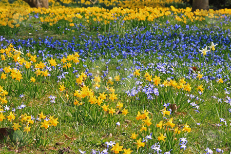 Spring field stock photo, Spring field photographed in Frankfurt Main, Hessen, Germany by Manuela Schueler