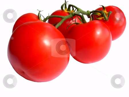 A bunch of tomato's  stock photo, A bunch of fife red and ripe tomato's together on the stem on white background. by Horst Petzold