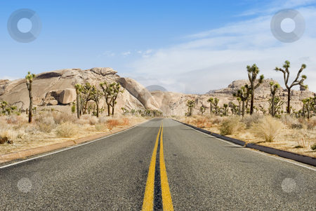 Joshua tree national park stock photo, A road through the joshua tree national park, california by Stephen Gibson